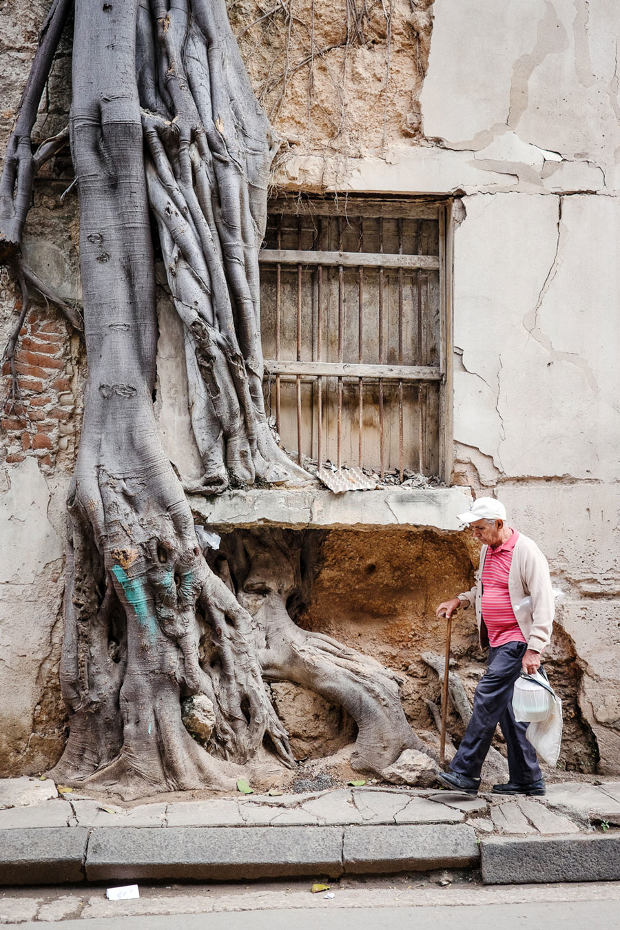 cuba-2016-old-man-passing-tree-out-of-wall-street-havana